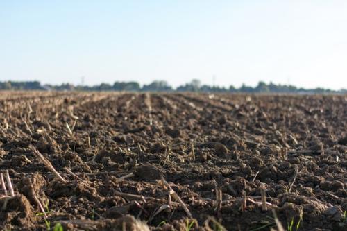 Новый биопрепарат для восстановления плодородия почв – почвоулучшитель от ООО