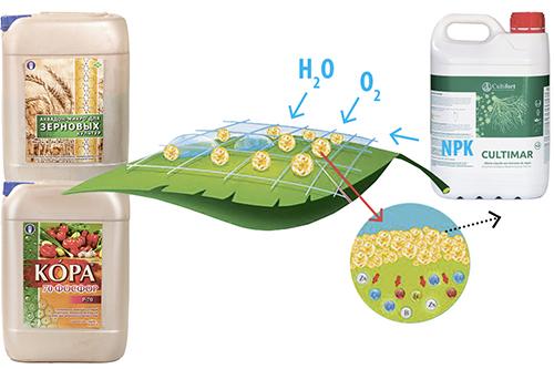 Эффективная схема питания озимой ржи на основе полимерных удобрений