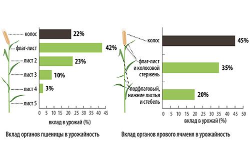 Стратегия защиты флаг-листа  озимых и яровых зерновых
