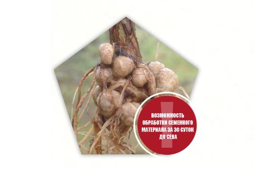 УЛЬТРАСТИМ® – новый инокулянт  для обработки семян сои