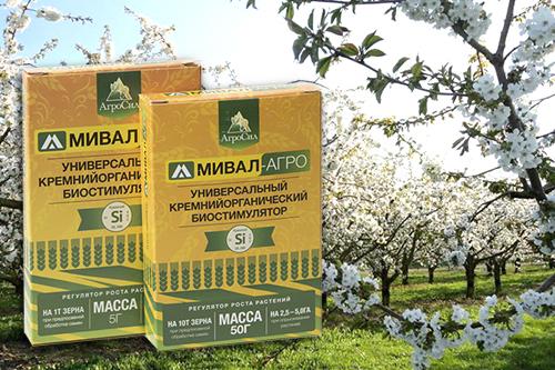 Опыт применения  стимулятора роста «Мивал-Агро»  в ООО «Дары садов»