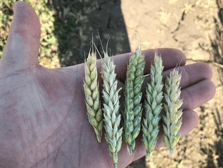 «BIO-SILICIUM» от ООО АТ ХРОМ ТРЕЙДИНГ —  инновация в сельском хозяйстве