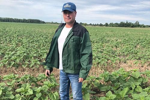 Увеличение урожайности с помощью  новых биопрепаратов линейки GROW