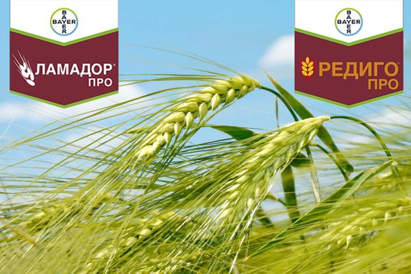 Ламадор® Про и Редиго® Про — специализированная защита ячменя до посева