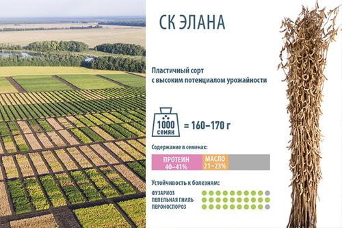 Новый сорт сои СК Элана – удачный выбор для Черноземья, Поволжья и Юга России