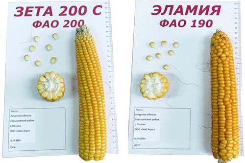 Результаты выращивания гибридов кукурузы  компании «Лабуле» в хозяйствах России
