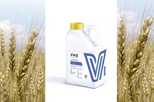 Повышение урожайности озимой пшеницы  в КФХ Усенков А.И. с помощью нового  стимулятора роста SILVER STAR Экстра Фосфор