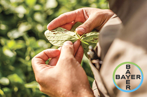 Новые стандарты  устойчивого земледелия  от Bayer