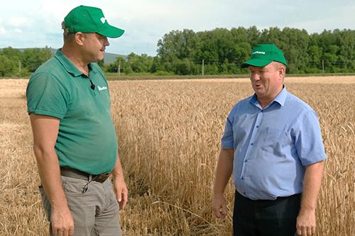 Технология повышения  качества и урожайности озимой пшеницы  биопрепаратами в хозяйствах Башкирии