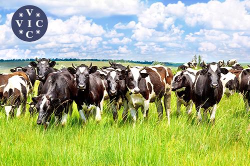 Профилактика теплового стресса  у молочного скота в летний период