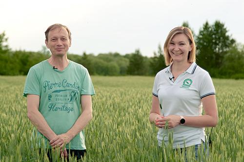 Новый гибрид озимой ржи Хеллтоп: опыт выращивания на силос и зерно