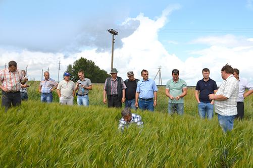 Повышение урожайности  и качества зерна  с технологией No-till  в КХ Евгения Долгова